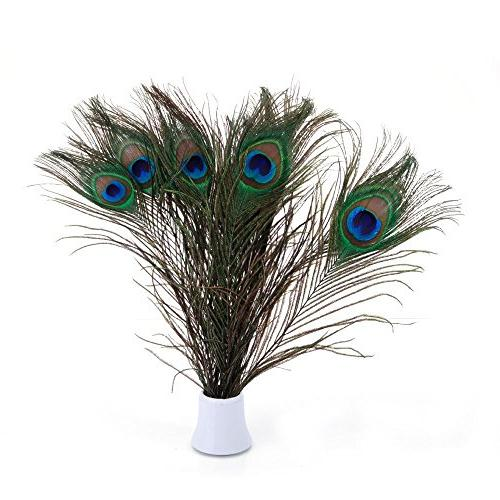 real peacock feathers 25 30cm